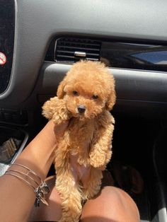 Super Cute Puppies, Cute Baby Dogs, Cute Little Puppies, Cute Dogs And Puppies, Cute Little Animals, Cute Funny Animals, Cute Babies, Doggies, Tiny Puppies