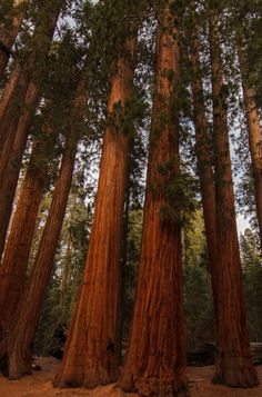 Sequoia National Park. Photo by Indrik Myneur
