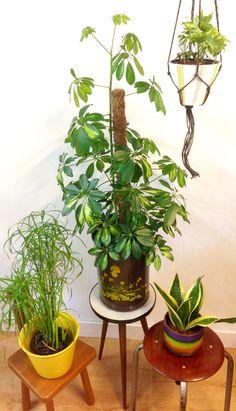 Retro bloempotten Vintage planters Brabantia prullenbak Retro planten