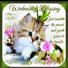 Wednesday Blessings With Bible Verse wednesday hump day wednesday quotes happy wednesday wednesday quote happy wednesday quotes wednesday blessings Wednesday Hump Day, Wednesday Greetings, Wednesday Wishes, Blessed Wednesday, Happy Wednesday Quotes, Good Morning Wednesday, Wonderful Wednesday, Wednesday Prayer, Wacky Wednesday