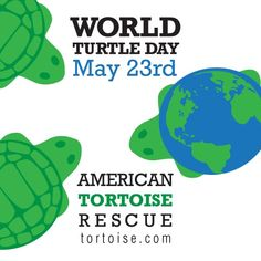 World Turtle Day National Turtle Day National Days Tortoise Rescue Sea Turtle