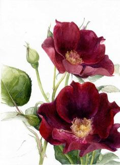 flower art Elaine Searle - Rosa Dusky Maiden, 2012 (Painting) Probably Rosa Rugosa which is a wild rose. Art Floral, Floral Vintage, Vintage Flowers, Vintage Art, Botanical Drawings, Botanical Prints, Botanical Flowers, Watercolor Flowers, Watercolor Paintings