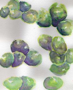 uvas. acuarelas