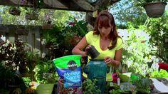 Dale mas sabor a tus recetas favoritas con hierbas cultivadas en tu propio jardín.