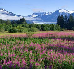 Travel Juneau - Juneau Convention & Visitors Bureau