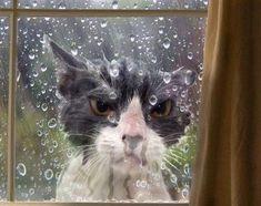 cutecatfunnies: not happy….