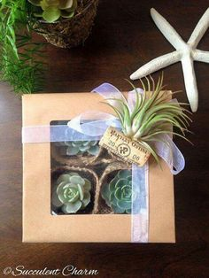 Items similar to Succulent Charm Gift Box Premium Assorted Succulents Decorative Air Plant Cork Magnet // Gift Idea // Graduation Gift // Teacher Gift on Etsy Succulent Gifts, Succulent Gardening, Cacti And Succulents, Cacti Garden, Suculentas Diy, Cactus E Suculentas, Mason Jar Gifts, Wine Gifts, Plant Projects
