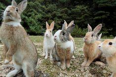 Resplendent rabbit #rabbitlovers