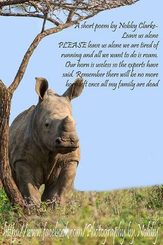 A poem about our beautiful Rhinoceros. I just love these animals Need Love, Just Love, This Is Us, Rhino Poaching, Nobby, Private Games, Short Poems, Sensitive People, Game Reserve