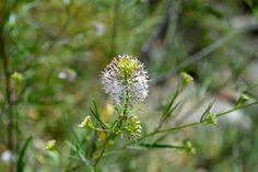 Tiny flower in Sequoia Nat'l Park
