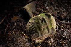 謎の古代文明の遺跡を中米で複数発見、マヤとは別   ナショナルジオグラフィック日本版サイト