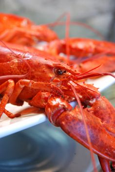 Fresh lobster from PEI in the Nutmeg Disrupted kitchen.