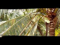 Tailandia   #GenuineCoconut   #AguadeCoco en su envase original #organico #WaterCoconut #Tailandia