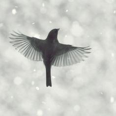Birds Flying in Snow photo series by Mingta Li. Elegance and innocence.