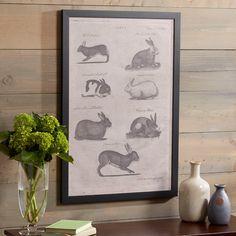 Rabbit Study Framed Print #birchlane