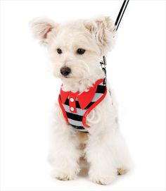 Dogo Fashions from New York has designed one of the most useful dog harnesses ever, and shown here in yuppie puppy polo stripes with lapels and buttons. To use