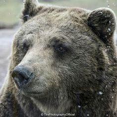 chubby-bears-tube-juicy-teens-being-fucked