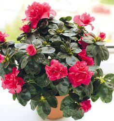 Viete, ktoré rastliny vás doma ochránia pred škodlivými látkami? | Môjdom.sk Christmas Wreaths, Floral Wreath, Holiday Decor, Home Decor, Floral Crown, Decoration Home, Room Decor, Home Interior Design, Flower Crowns