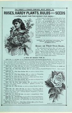 Our new guide to rose culture : 1893