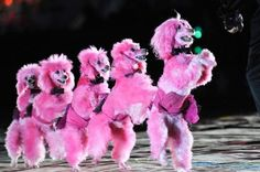 pink dogs on parade
