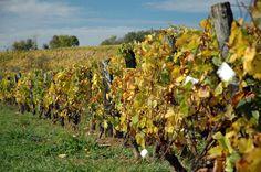 Route gourmande des vignobles du Jura