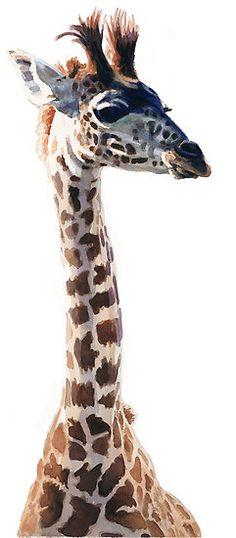 """Little Giraffe"" Wildlife Animal Watercolor by Paul Jackson"