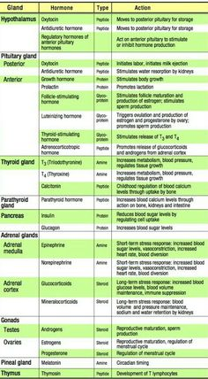 Biology Classroom, Nursing School Notes, Pharmacology Nursing, Medical Anatomy, Human Anatomy And Physiology, Medical Coding, Medical Facts, Nursing Tips, Nursing Students