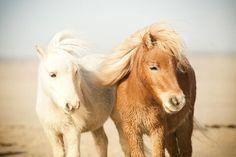 Horses on the beach.