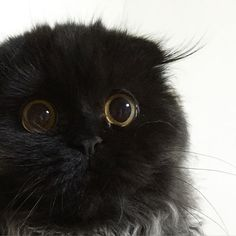 귀털 넘나 귀엽고요? #cat #gimo #동공미남 #발랄한귀털