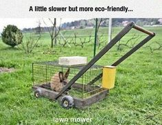 Funny pictures about Eco-Friendly Mower. Oh, and cool pics about Eco-Friendly Mower. Also, Eco-Friendly Mower photos. Jokes Photos, Funny Photos, Permaculture, Tierischer Humor, Humour Quotes, Life Humor, Haha, Lawn Care, Inventions