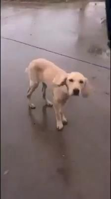 Animal Humour, Funny Animal Jokes, Cute Funny Dogs, Cute Funny Animals, Cute Animal Videos, Cute Animal Pictures, Cute Dogs And Puppies, Baby Dogs, Doggies