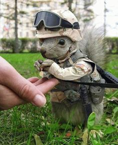 What does secret squirrel mean in the military