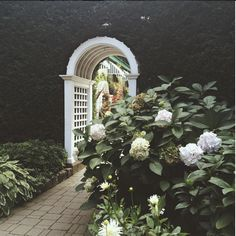 A brick pathway and arched trellis surrounded by tall hedges, hydrangea bushes and hosta plants. Best Perennials, Flowers Perennials, Planting Flowers, Hydrangea Bush, Hydrangea Care, Hydrangeas, Easiest Flowers To Grow, Hosta Plants, Flower Farmer