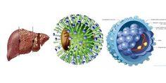 http://yduochoaviet.com/benh-ly-gan-mat/1432-6-yeu-to-gay-cac-benh-ve-gan-mat.html 6 yếu tố gây các bệnh về gan mật