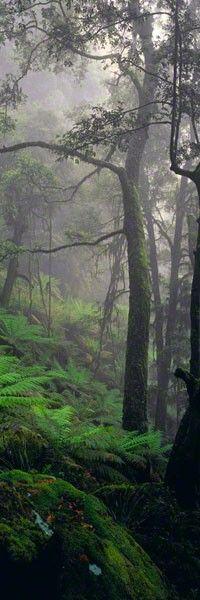 A walk in the Dorrigo rainforest (NSW)