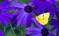 wallpaper, butterfly, desktop, image
