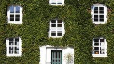 Haus, Fassade, mit Efeu bewachsen
