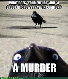 Caw Caw, Motherfrickers-yea, i thought this was terrifyingly hilarious