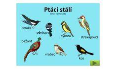 Související obrázek Bird, Animals, Image, Animales, Animaux, Birds, Animal, Animais