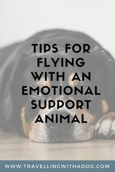 Learn what you need to do before flying with an emotional support animal (ESA). Emotional Support Dog Training, Emotional Support Animal, Flying With Pets, Flying Dog, Shih Tzu Puppy, Shih Tzus, Animal Letters, Dog Training Videos, Dog Travel