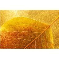 Føj clipart til din fil Clip Art Library, Autumn, Image, Fall Season, Fall