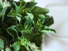 Aceite de Menta. Uno de los más usados en aromaterapia