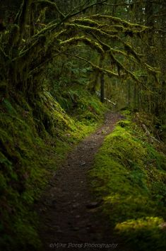 Gorgeous rainforest-like hikes await near Cottage Grove - captured by Mike Potts. Gorgeous rainforest-like hikes await near Cottage Grove - captured by Mike Potts. Landscape Photography, Nature Photography, Photography Tips, Travel Photography, Forest Path, Forest Trail, Dark Forest, River Trail, Wild Forest