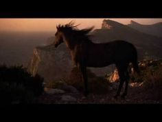 """Black Dream - Black Stallion Music Video """"The Voice"""" """"Bring me your peace, and I will be healed"""" Majestic Horse, Majestic Animals, Beautiful Horses, Black Horses, Wild Horses, Black Stallion Movie, Horse Movies, Horse Wallpaper, Horse Videos"""