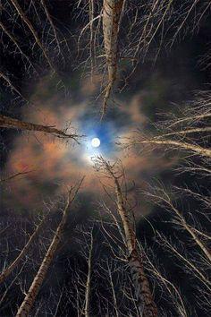 Luna en el bosque...