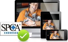 Doggy Dan's SPCA  endorsed training program is a fun and humane way to train your labrador