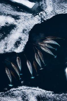 Rassemblement de licorne-sirènes sur leur plage de glace ♥