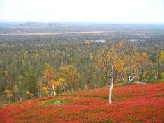 Ruska, Luosto, tunturi, Sodankylä Autum Leaves, Hiking Routes, Stay Overnight, I Want To Travel, Art Ideas, National Parks, Landscaping, Europe, Houses