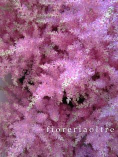 Fioreria Oltre/ Pink astilbe