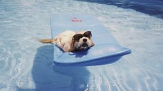 Pets Who Beat the Summer Heat: They don't call them the Dog Days of Summer for nothing.